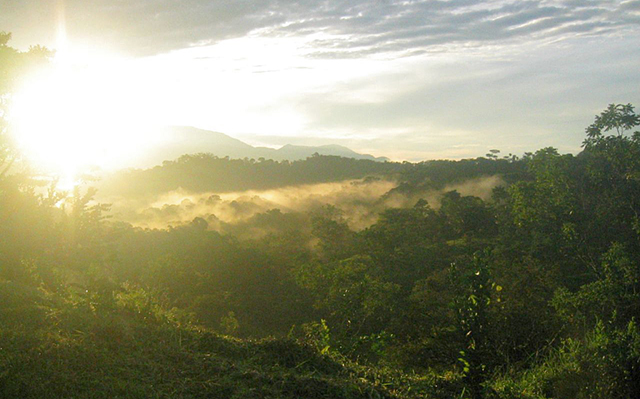 Cloud Forest Costa Rica by Micah MacAllen