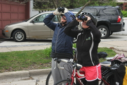 Two women on bikes, looking up through binoculars.