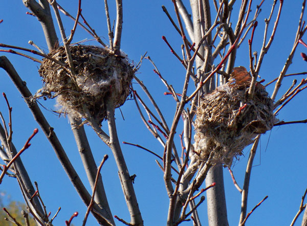 Small Birds Nests