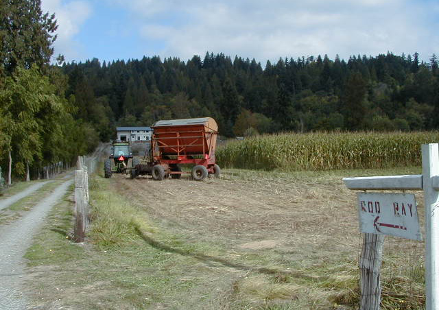 A tractor makes its way through a field surrounded by a redcedar windbreak.