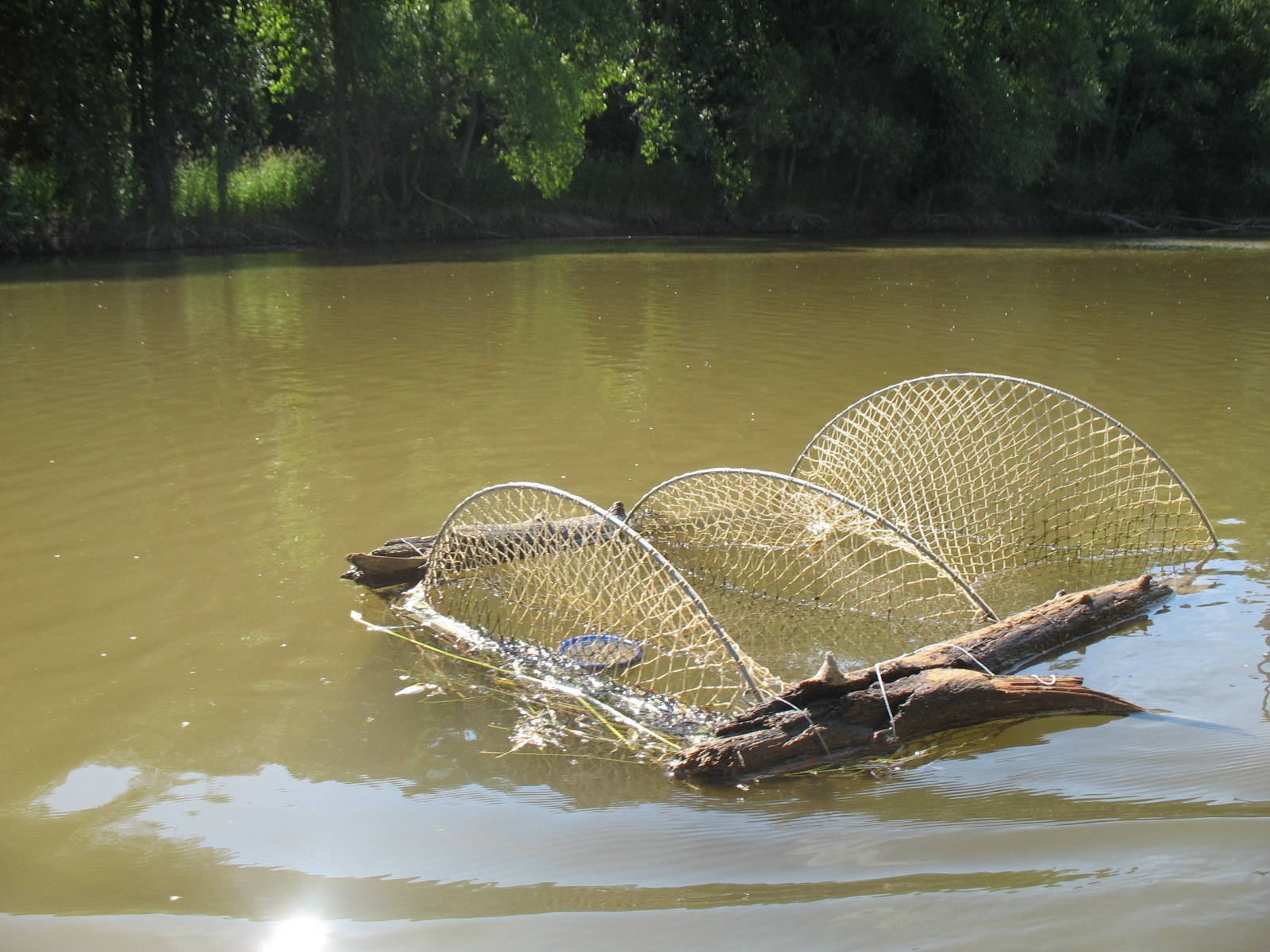 Turtle nets baited in the water