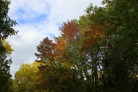 Fall Colors: How and Why?