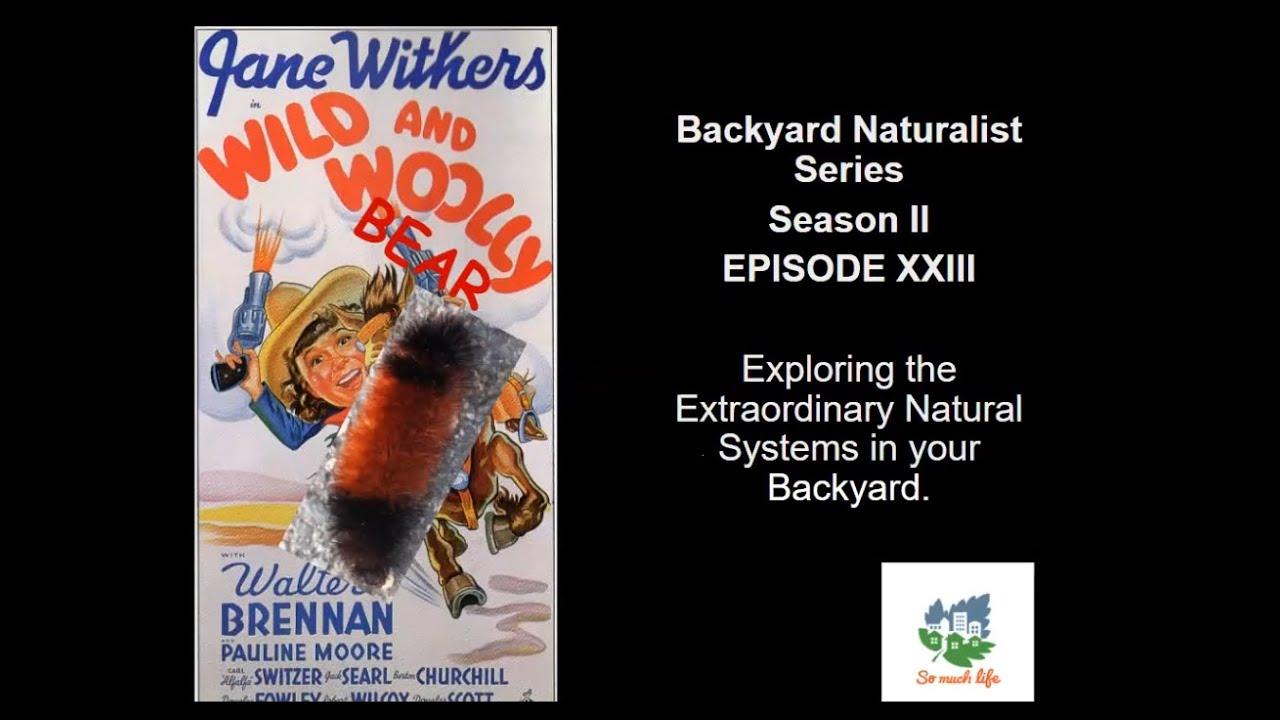 Wild and Woolly Bear - Backyard Naturalist