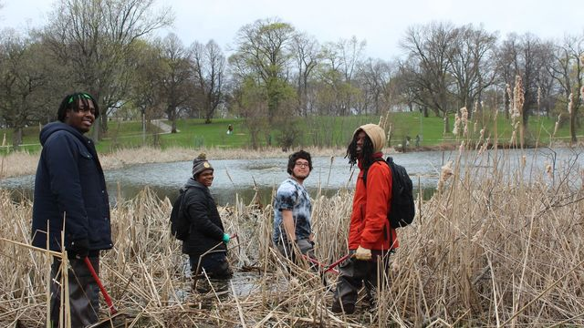 A group of young men turn from their work in a cattail area to smile at the camera.