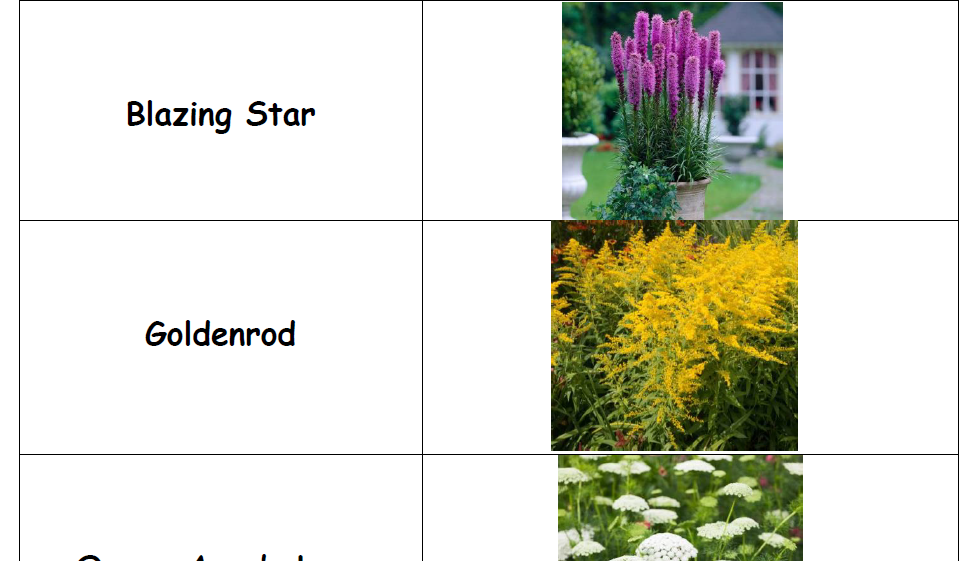 Wildflowers in Summer: Parent Guide