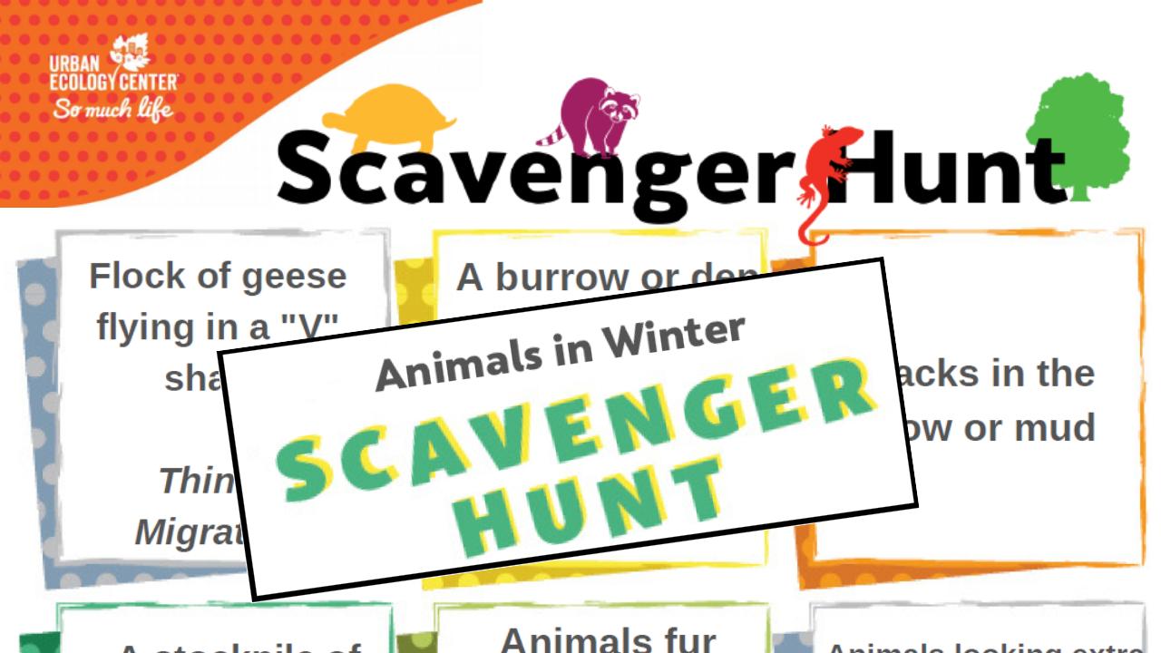 Animals in Winter Scavenger Hunt