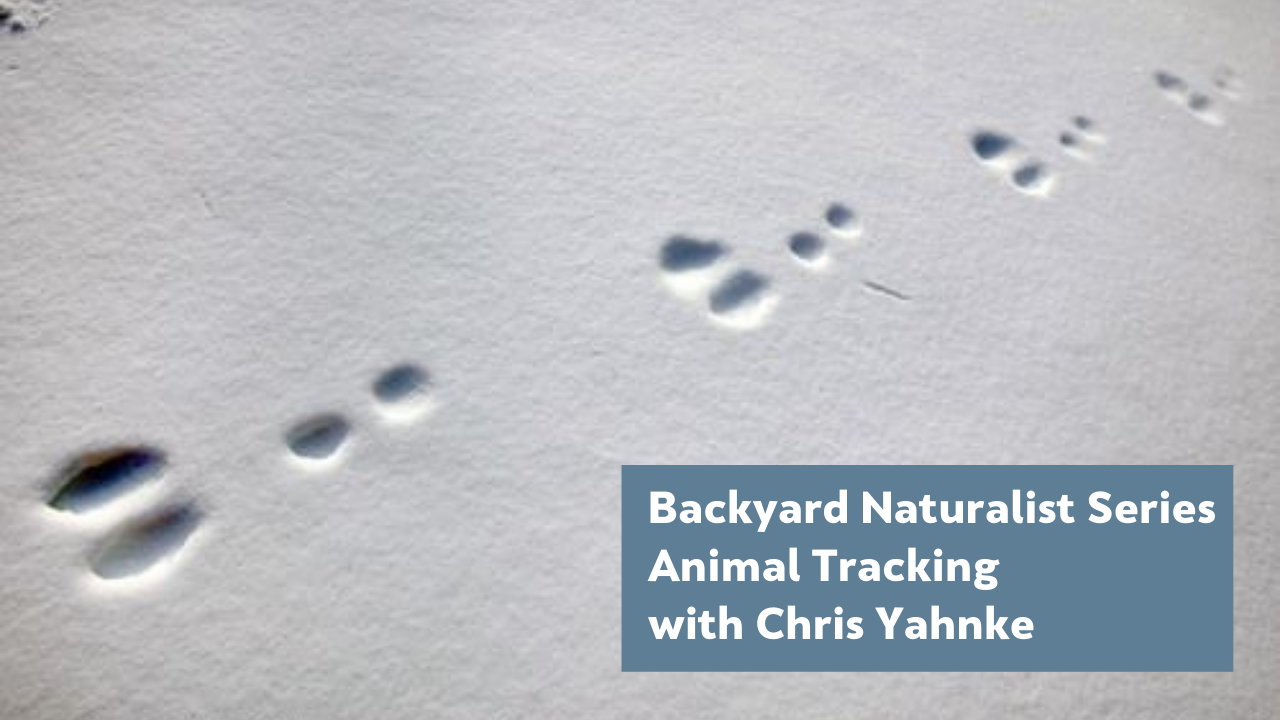 Backyard Naturalist Series: Animal Tracking (with guest lecturer Chris Yahnke)