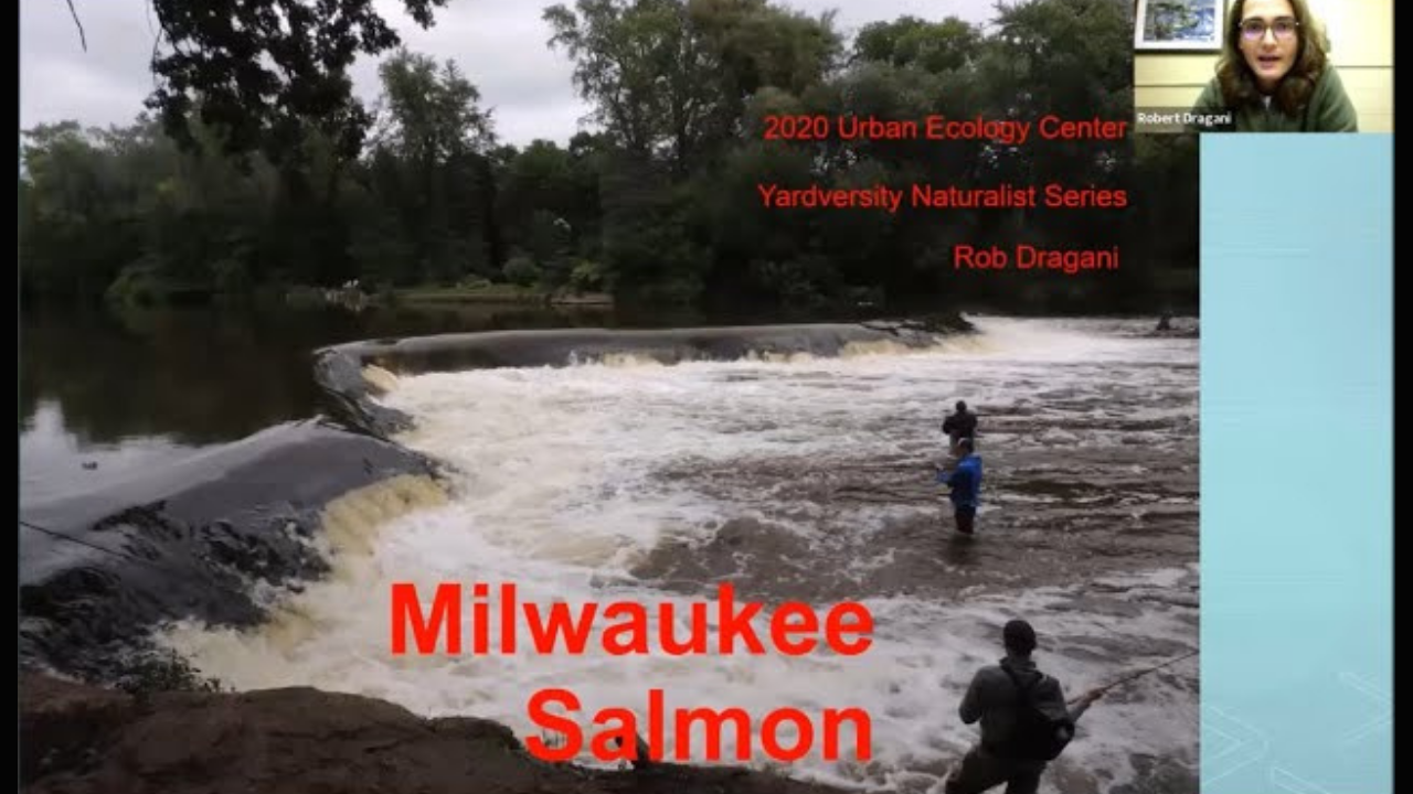 Backyard Naturalist Series: Milwaukee Salmon (with guest lecturer Rob Dragani)