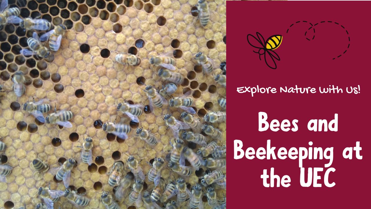 Bees and Beekeeping at the UEC