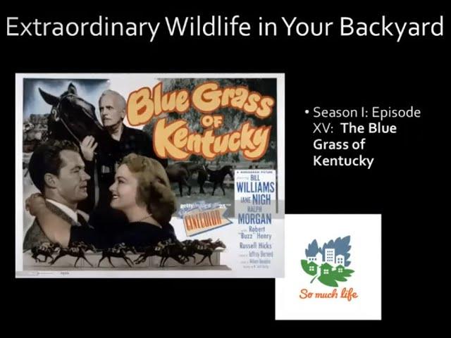 Extraordinary Wildlife in Your Backyard, Season 1, Episode XV: Blue Grass of Kentucky