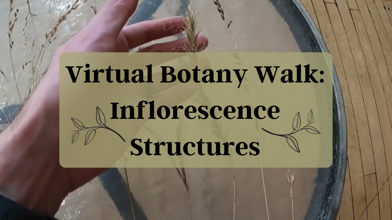 Virtual Botany Walk: Inflorescence Structures