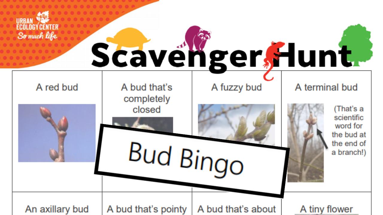 Bud Bingo