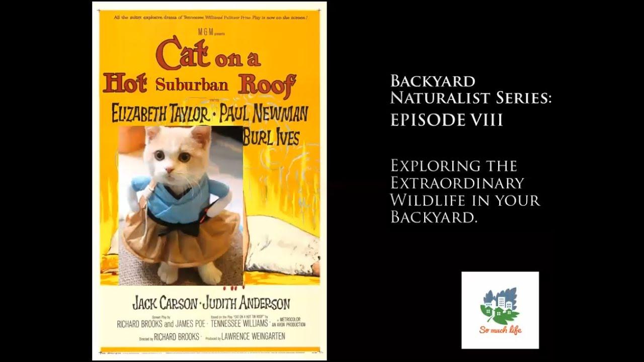 Backyard Naturalist Series, season 2, episode 8: Cat on a Hot, Suburban Roof