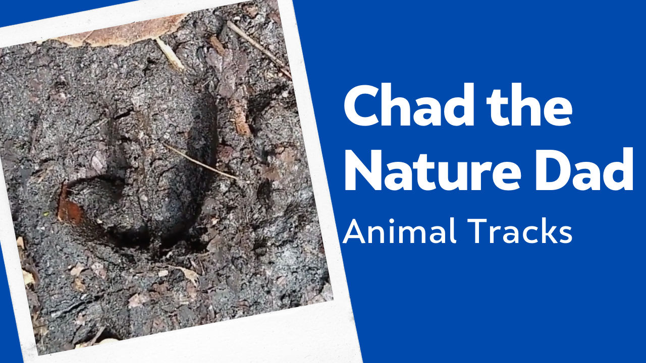 Chad the Nature Dad: Animal Tracks