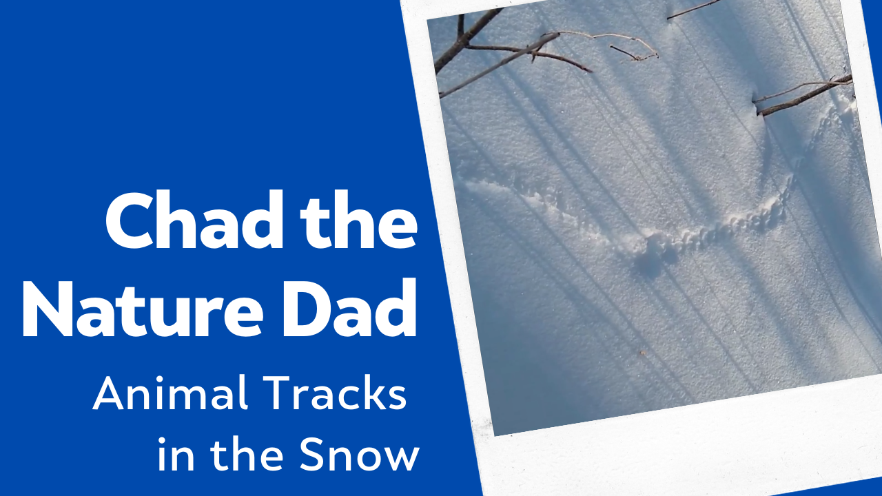 Chad the Nature Dad: Animal Tracks in the Snow
