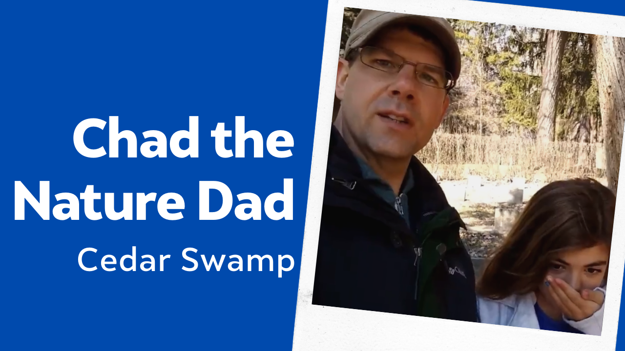Chad the Nature Dad: Cedar Swamp