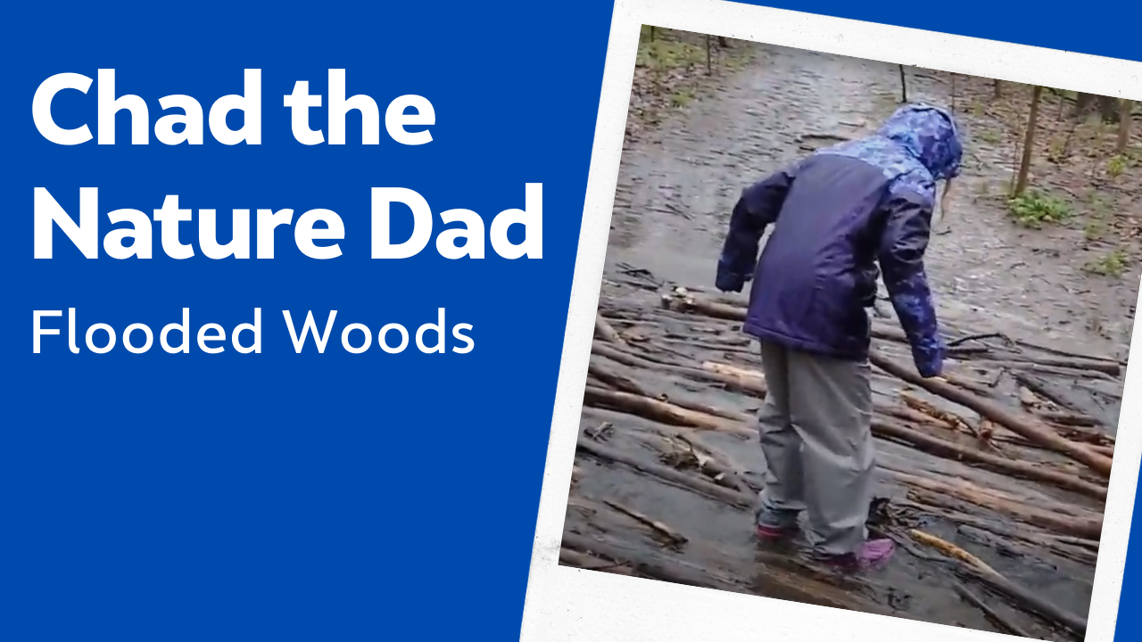 Chad the Nature Dad: Flooded Woods