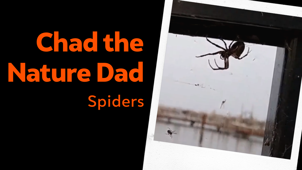 Chad the Nature Dad: Spiders