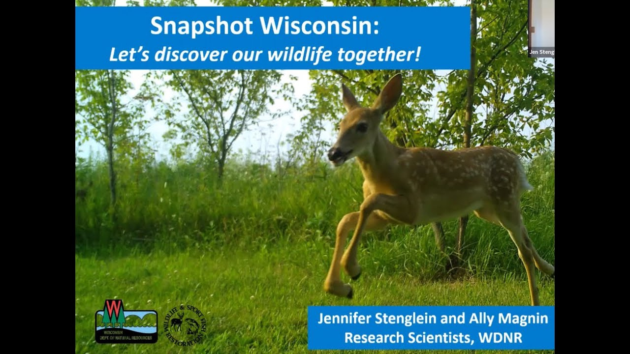 Discovering Wildlife with Trail Cameras