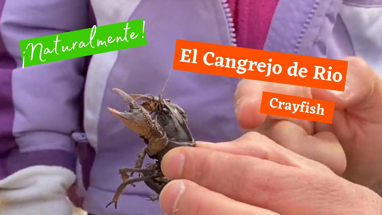 Exploring Nature: Crayfish