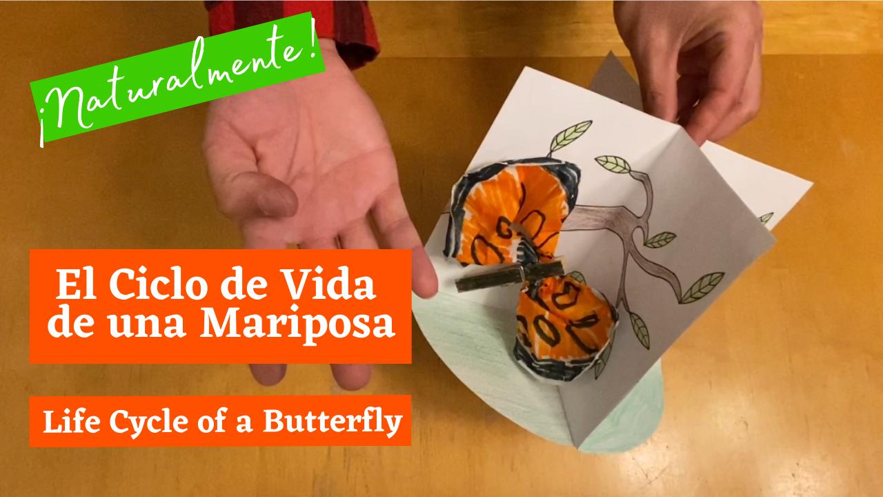 El Ciclo de Vida de una Mariposa (Life Cycle of a Butterfly)