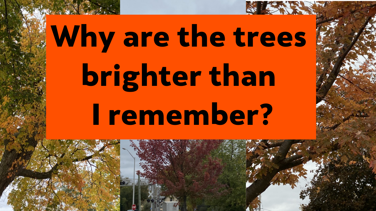 Why are the trees brighter than I remember?