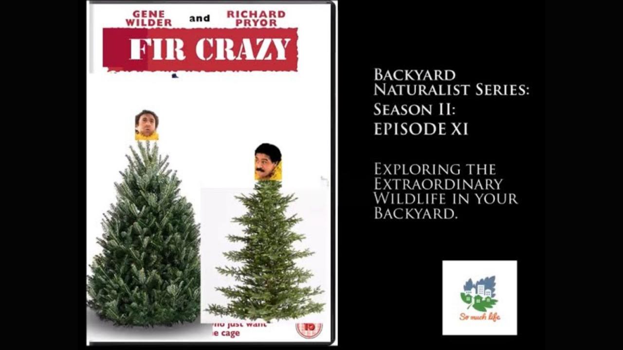 Backyard Naturalist Series, season 2, episode 11: Fir Crazy