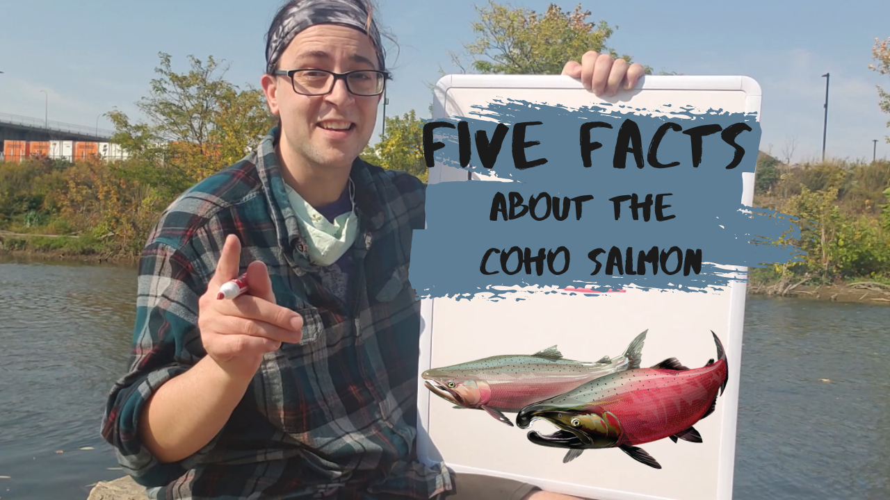 Five Facts about the Coho Salmon