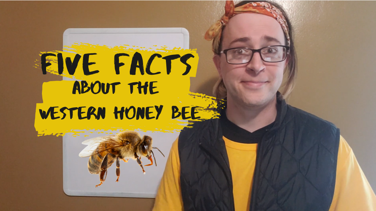 Five Facts about the Western Honey Bee
