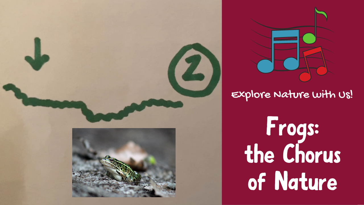 Frogs: the Chorus of Nature