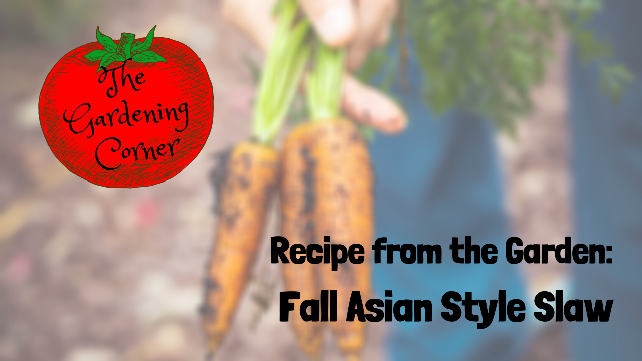 Recipe from the Garden: Fall Asian Style Slaw