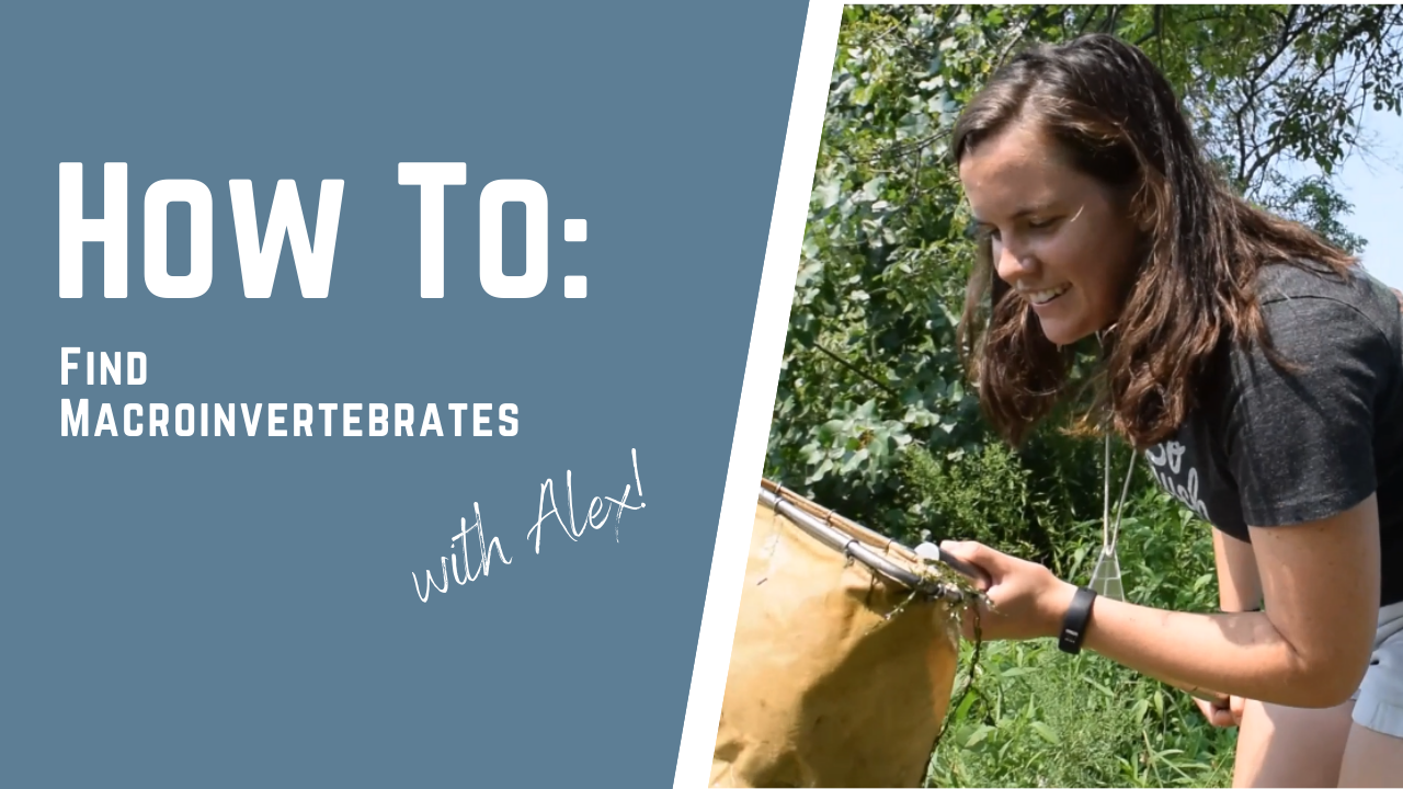 How To Find Macroinvertebrates