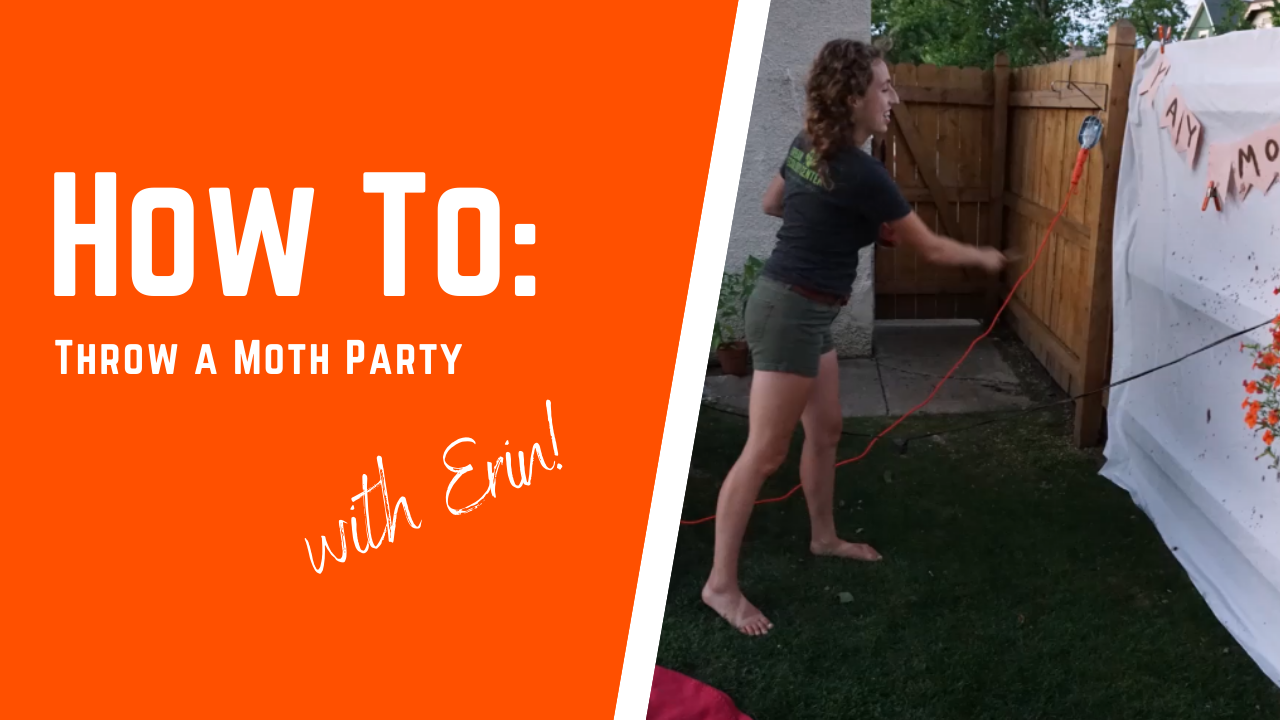 How To Throw a Moth Party!