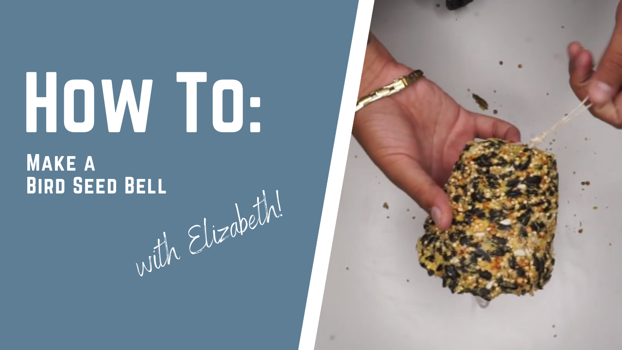 How To Make a Bird Seed Bell