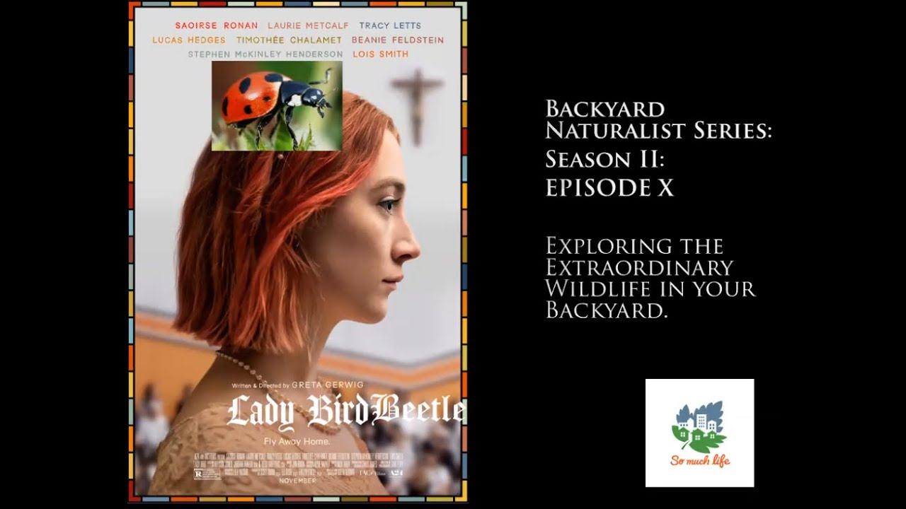Backyard Naturalist Series, season 2, episode 10: Lady Bird Beetle