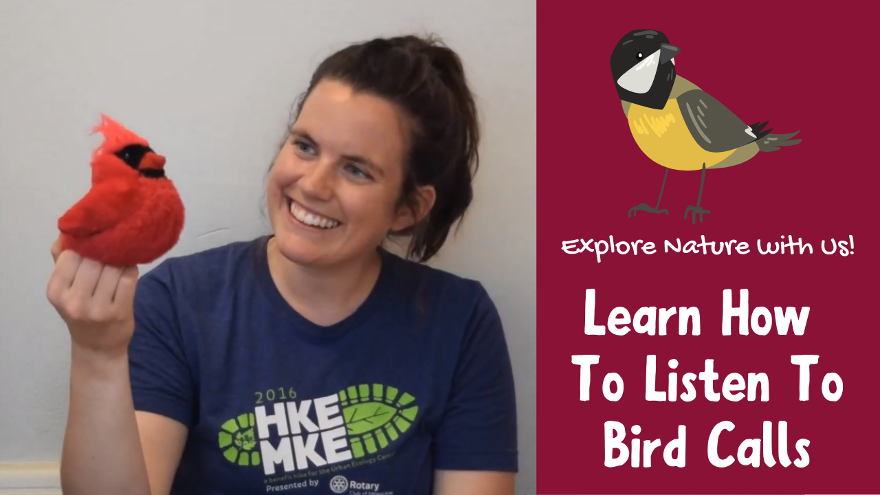 Learn how to listen for bird calls