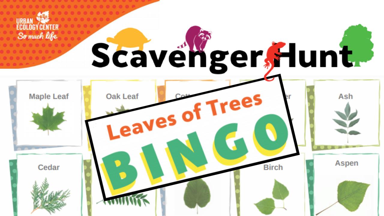 Scavenger Hunt: Leaves of Trees