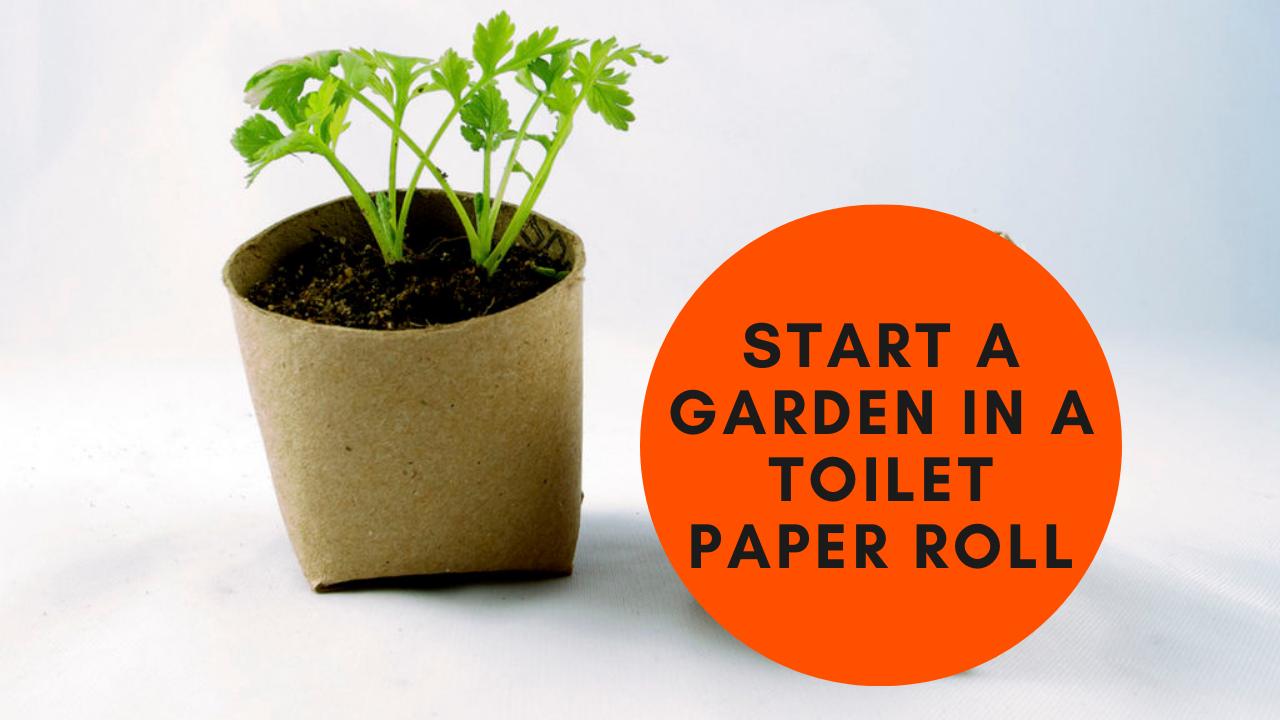 Start a Garden in a Toilet Paper Roll