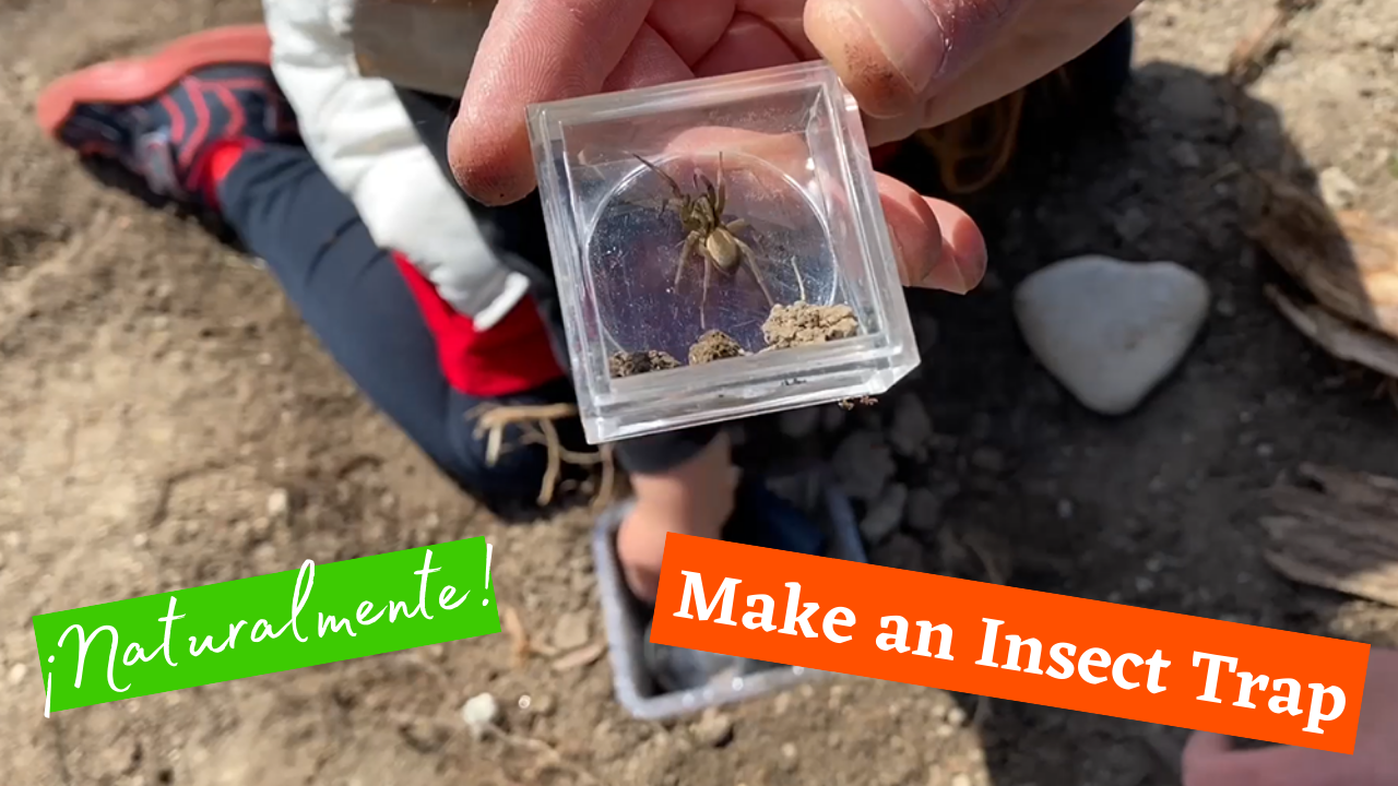 Exploring Nature: Make an Insect Trap! (Part 1)