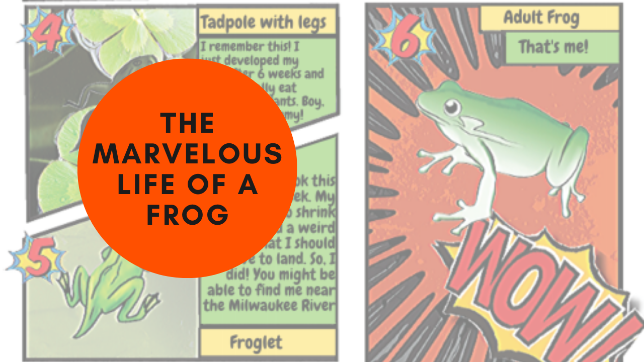 Marvelous Life of a Frog!