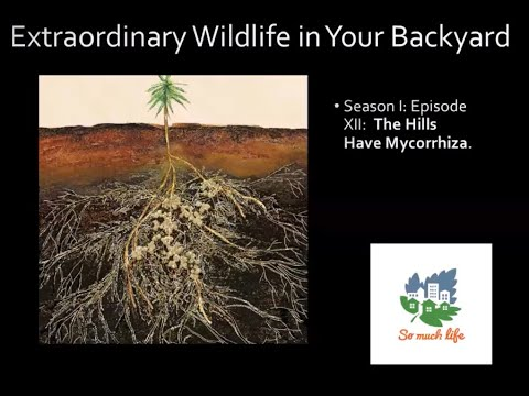 Extraordinary Wildlife in Your Backyard. Season 1, Episode XII: The Hills Have Mycorrhiza