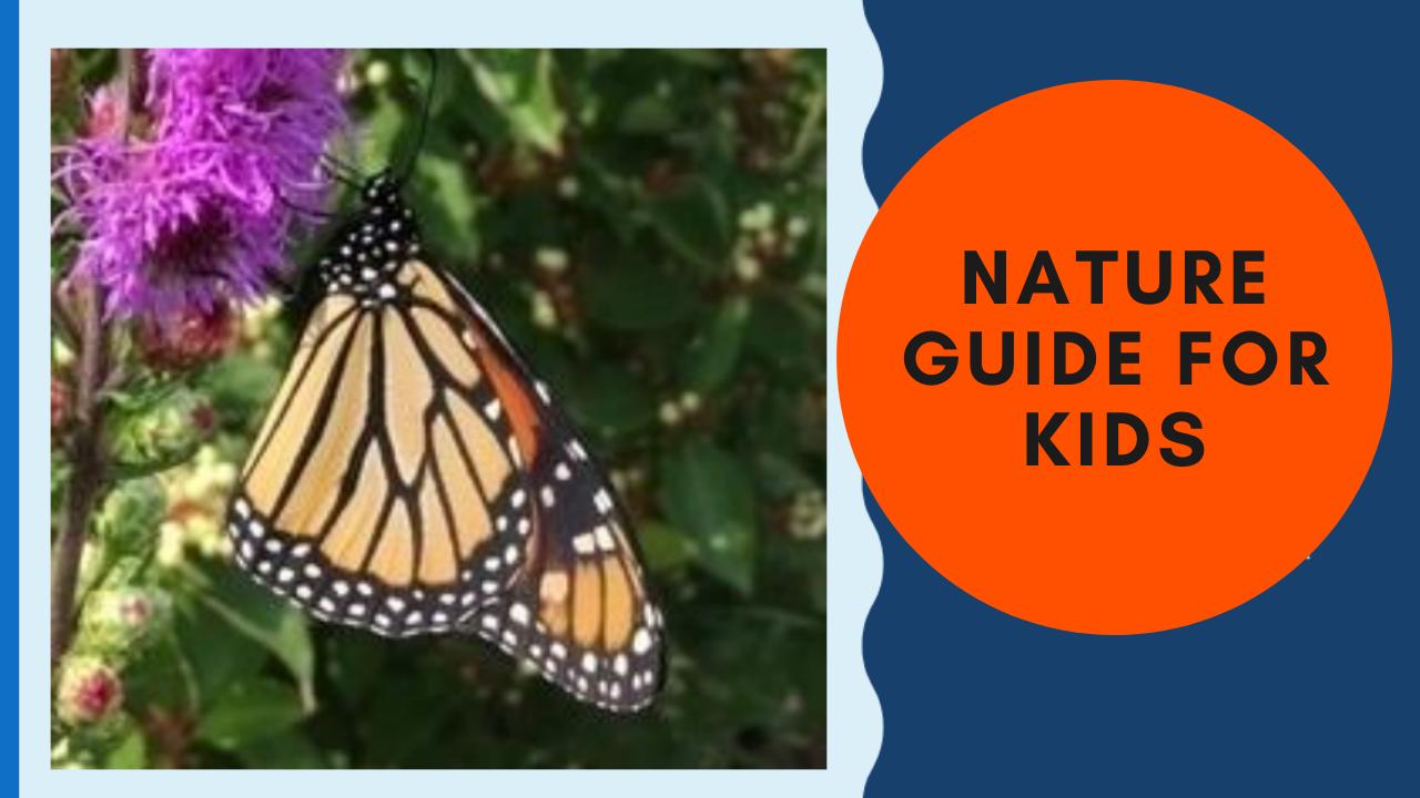 Nature Guide for Kids (Guía de naturaleza para niños)