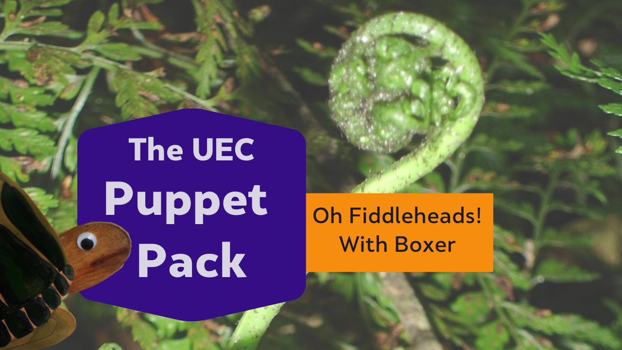 Oh, Fiddleheads! with Boxer