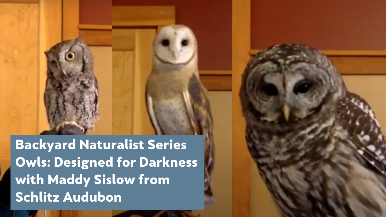 Owls: Deisgned for Darkness (with guest lecturer Maddy Sislow and the owls from Schlitz Audubon)