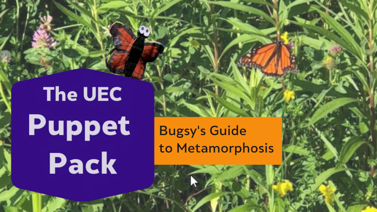 Bugsy's Guide to Metamorphosis