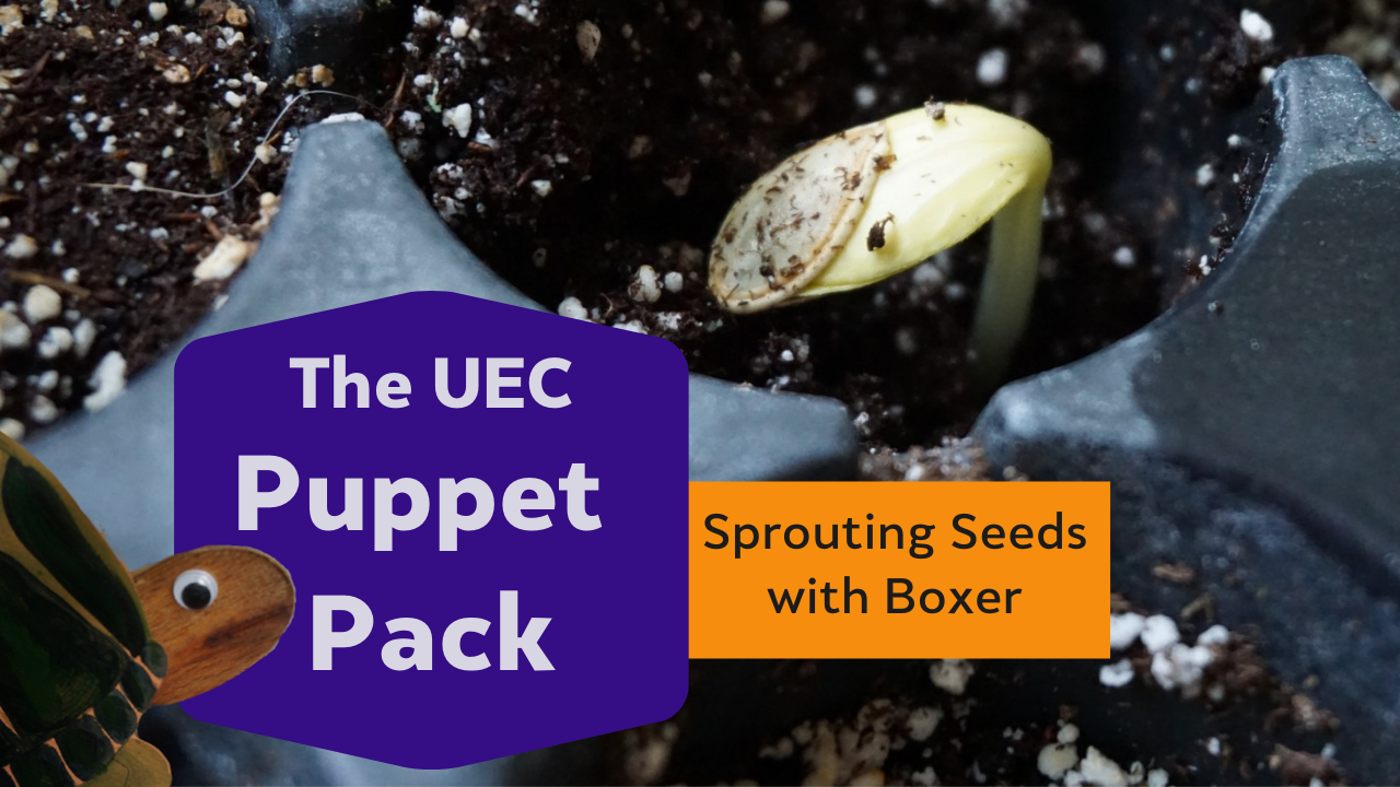 Sprouting Seeds with Boxer