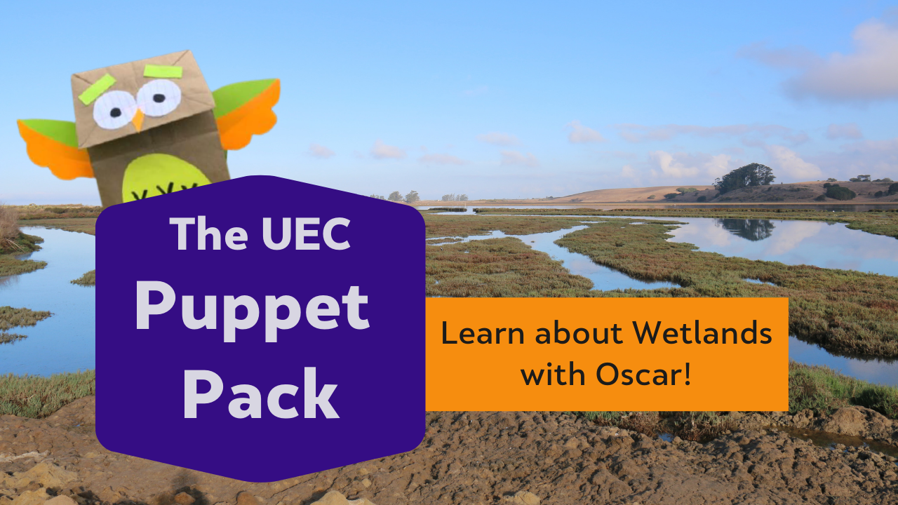 Learn about Wetlands with Oscar