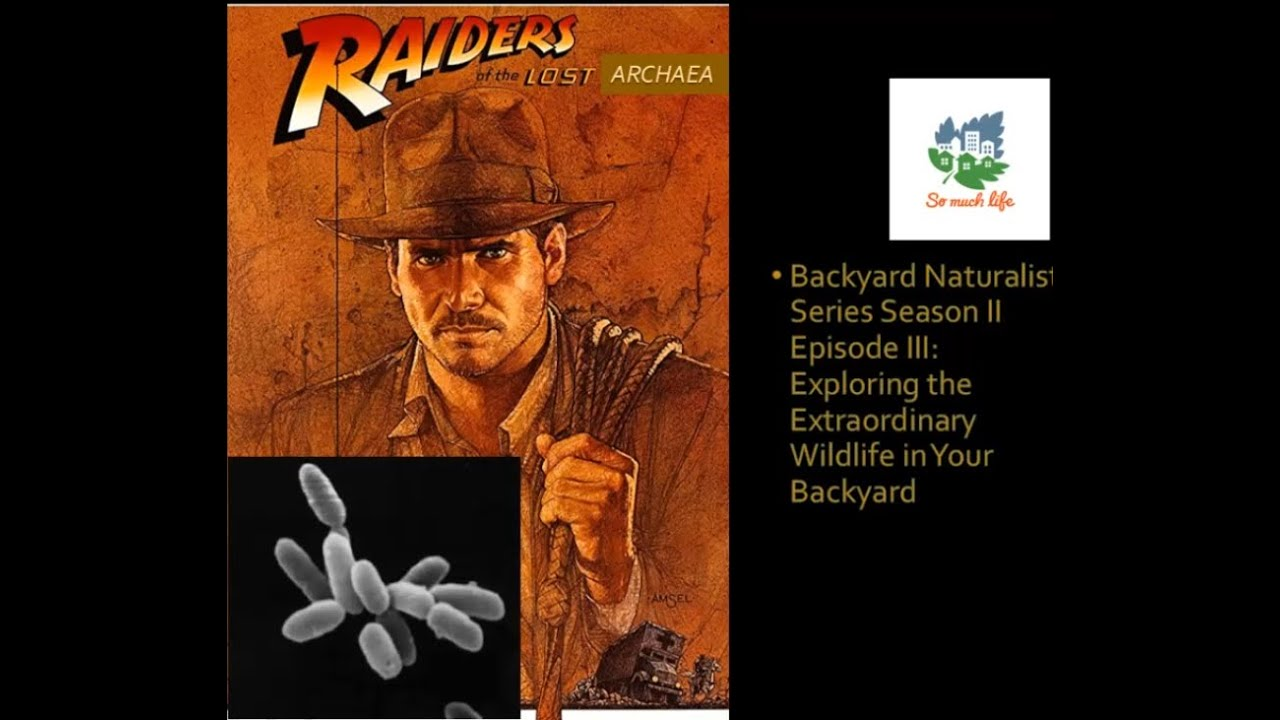 Backyard Naturalist Series, season 2 episode 3: Raiders of the Lost Archaea