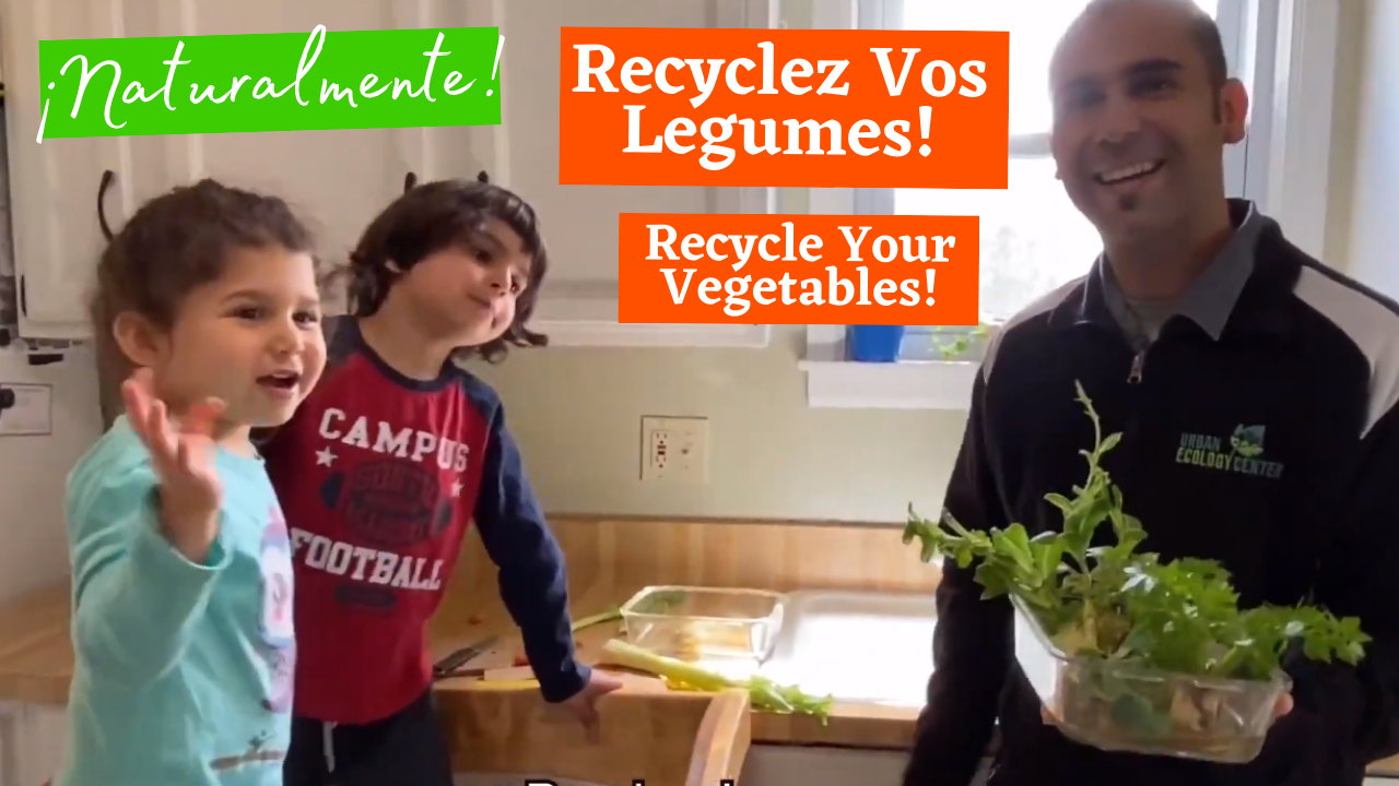 Recycle Your Vegetables - Recyclez Vos Legumes