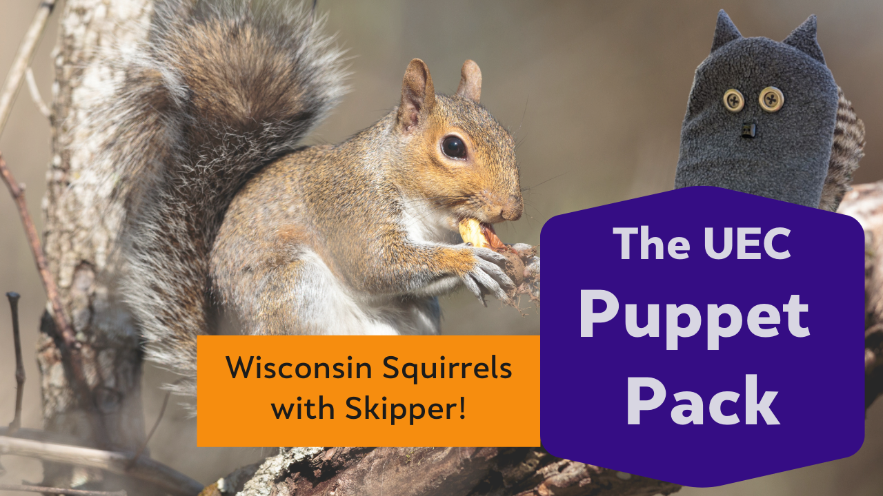 Wisconsin Squirrels with Skipper!